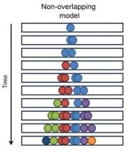 non-overlapping model